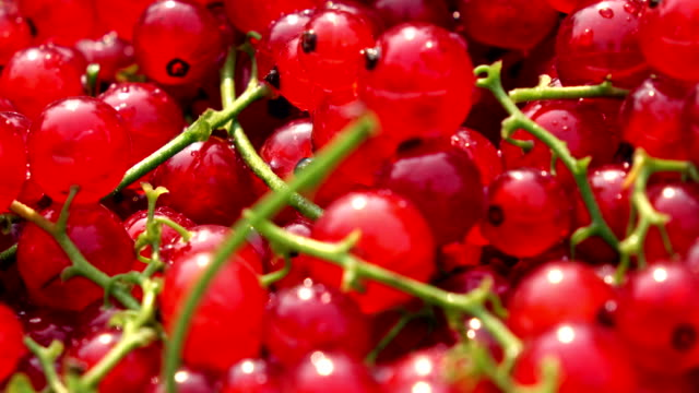 heap of red currant with stems fullhd macro dolly clip - ribes rosso video stock e b–roll