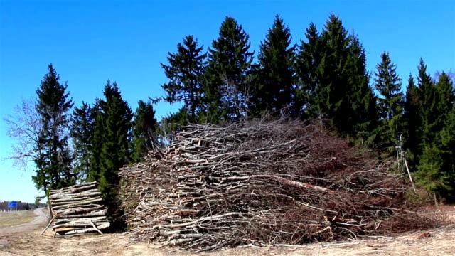heaps of firewoods from cut trees - segatura video stock e b–roll