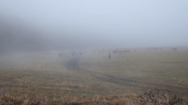 朝の霧の下にアルタイ山脈で馬のことを聞いた ビデオ