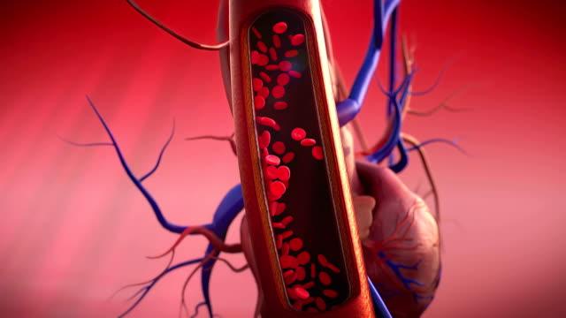 vídeos de stock e filmes b-roll de artéria, coração - sistema cardiovascular