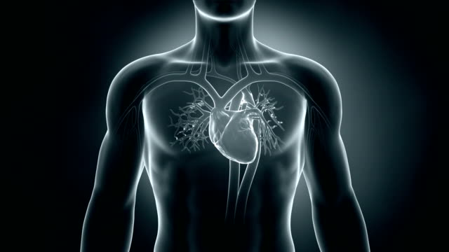 Heart beat in loop Heart beat in loop in 3D human heart stock videos & royalty-free footage