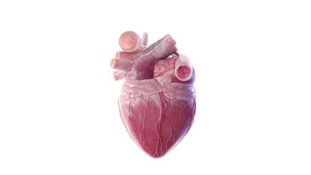 hjärta slår skivspelare - kroppsdel bildbanksvideor och videomaterial från bakom kulisserna