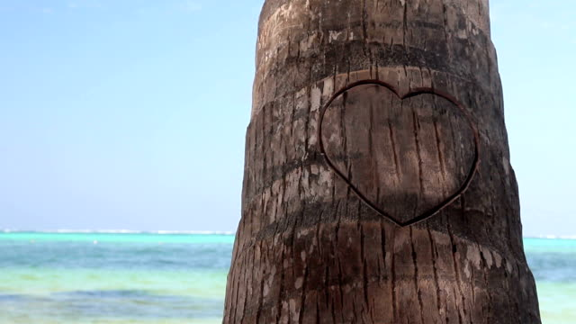 Heart cutted on palm tree on caribbean beach