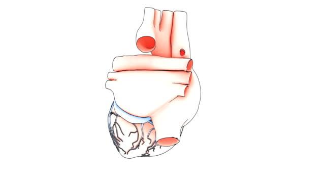 heart draw video