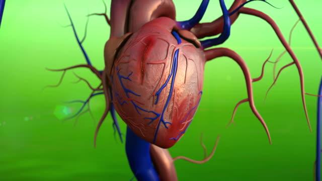 vídeos de stock e filmes b-roll de coração, ataque cardíaco - artéria coronária