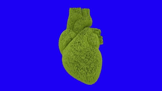Heart of fresh green grass beating. Blue screen