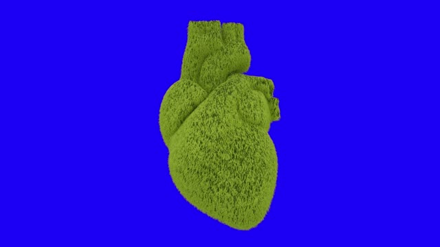heart of fresh green grass beating. blue screen - earth day stock videos & royalty-free footage