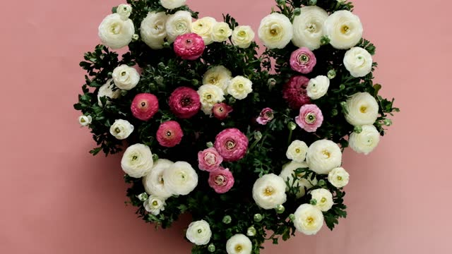 Heart shaped flowers bouquet. Ranunculus bouquet. Heart shaped buttercups. Pink and white flowers ranunulus on a  pink background. Wedding day. Valentine's day, birthday