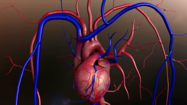 vídeos de stock e filmes b-roll de coração - artéria coronária
