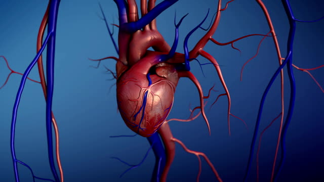 Royalty Free Splenic Artery HD Video, 4K Stock Footage & B-Roll - iStock