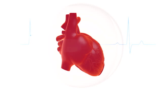 vídeos de stock e filmes b-roll de heartbeat animation - coração humano