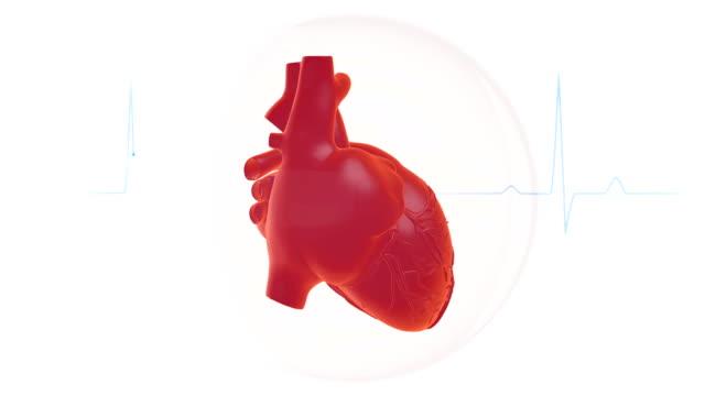 Heartbeat Animation Heartbeat Animation heart internal organ stock videos & royalty-free footage