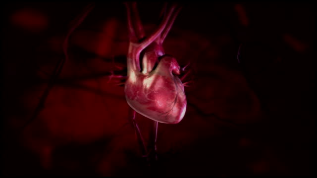 Heartbeat animations with veins and arteries. HD video