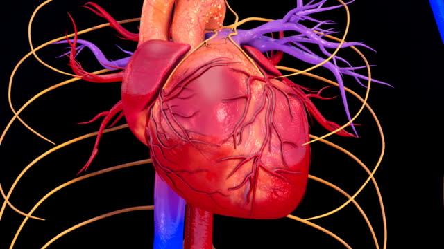 Heartbeat video