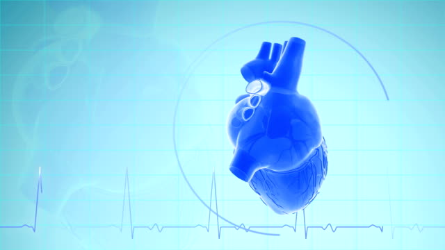 Heartbeat With Pulse Waveform Heartbeat With Pulse Waveform Animation human heart stock videos & royalty-free footage