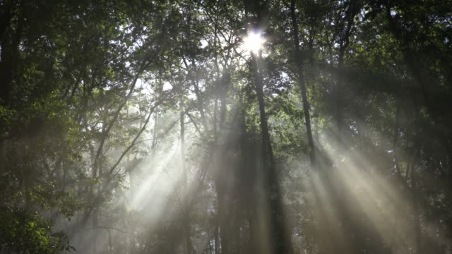 heavenly light - trees in mist stock videos & royalty-free footage