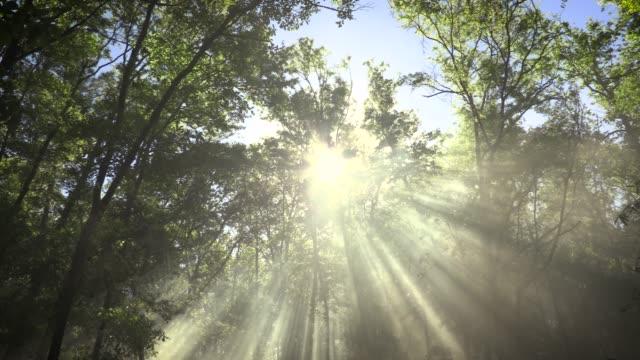 天の光 - 木漏れ日点の映像素材/bロール