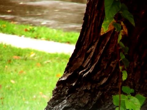 Heavy Autumn Rain video