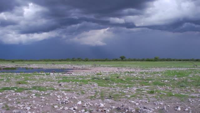 schweren wolken über etosha national park - wasserloch stock-videos und b-roll-filmmaterial