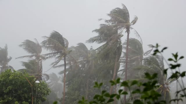 heavy rain and violent wind on palm trees during a classic tropical storm in monsoon season in south east asia - monsone video stock e b–roll