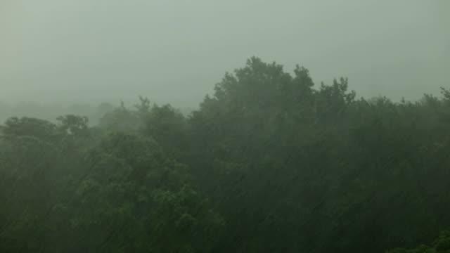 Heavy rain and wind shakes the trees. Hurricane. video