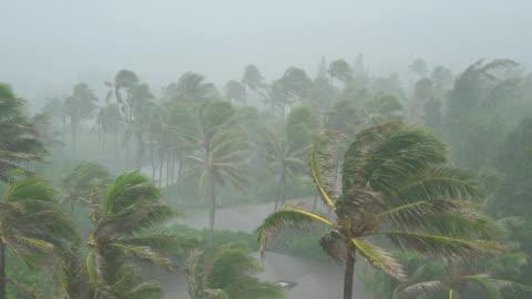vidéos et rushes de vents et fortes pluies a frappé hawaï - ciel couvert