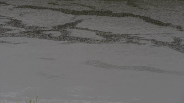 Heavy rain pounding the surface of the lake, raindrops fall