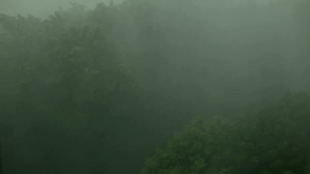 Heavy rain, strong wind shakes branches of trees. video