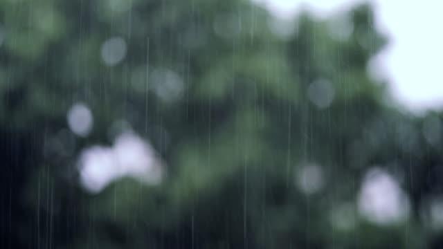vídeos y material grabado en eventos de stock de lluvias con árboles en el fondo - terreno extremo