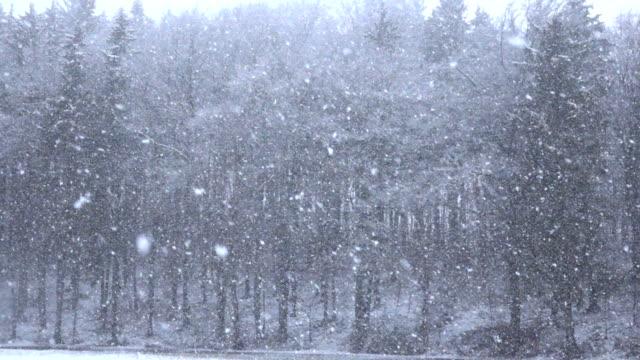 närbild: tung snö faller från himlen på höga träd och snöiga slätter - djupsnö bildbanksvideor och videomaterial från bakom kulisserna