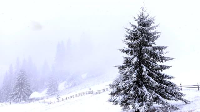 heavy snow falling in a forest in winter time - decorazione per dolci video stock e b–roll