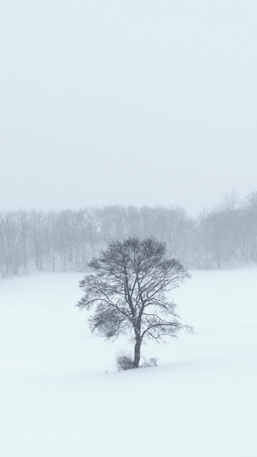 heavy snowfall - single tree vertical video
