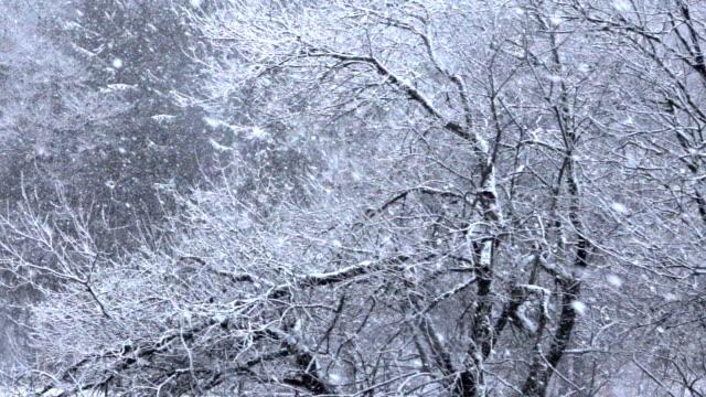 aerial slow motion: tunga snöar blizzard i vackra vita vinter vildmark - djupsnö bildbanksvideor och videomaterial från bakom kulisserna
