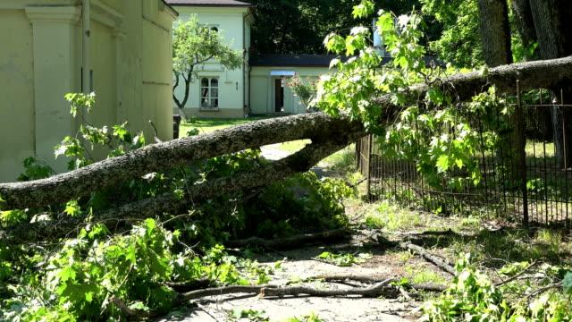 vídeos de stock, filmes e b-roll de filial de árvore pesada caída na cerca e na entrada à casa residencial - danificado
