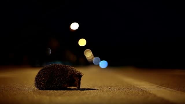 HD - Hedgehog crossing the Street at Night video