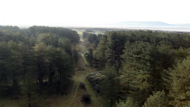 Helicopter flight over beautiful woods and gardens video