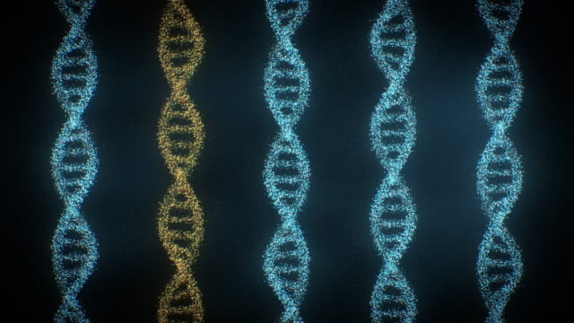 DNA Helixes Rotating made of particles Slowly rotating five DNA helixes made of particles. They are building up in blue color then one of them is turning to gold color. biosensor stock videos & royalty-free footage