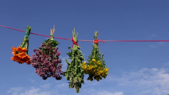 herbalist hanging bunches of various medical healthy herbs video
