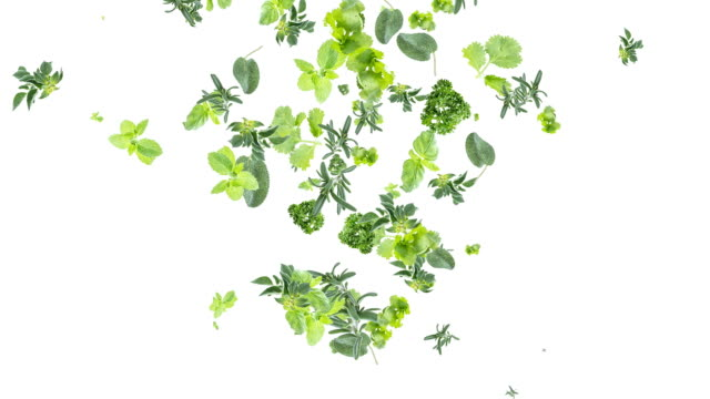 Herbs falling down on white background video