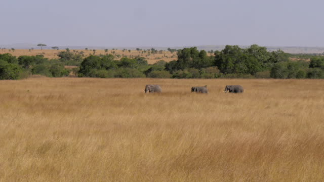 A Herd Elephants With Baby Moving Across Field Of The African Savannah 4K video