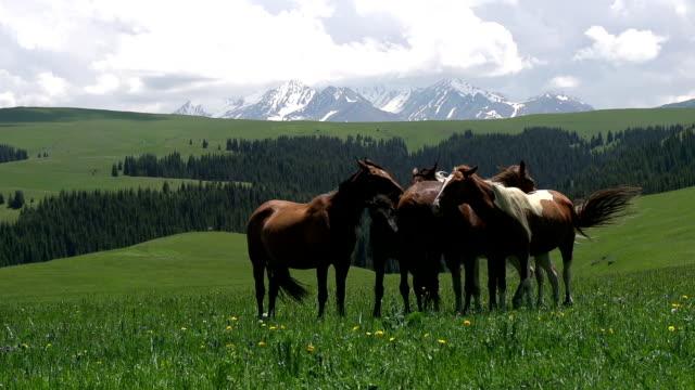 Herd in the Picturesque Foothills video