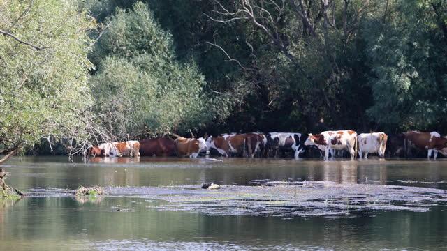 nehir kıyışeridinde asılı sürüsi - sale stok videoları ve detay görüntü çekimi