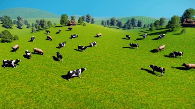 動物の群れの牛のパスチュア空からの眺め - 牧畜場点の映像素材/bロール