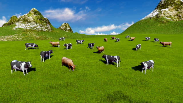 Herd of cows on alpine pasture Aerial view video