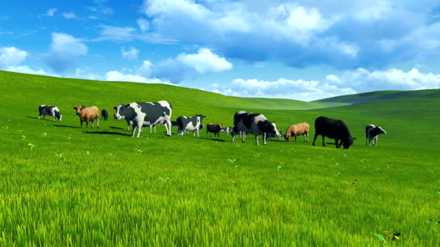 Herd of cows on pasture video