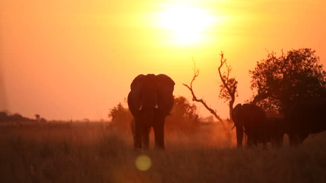 A herd of elephants silhouetted at sunset.