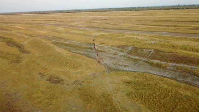 Herd of horses. Aerial survey video