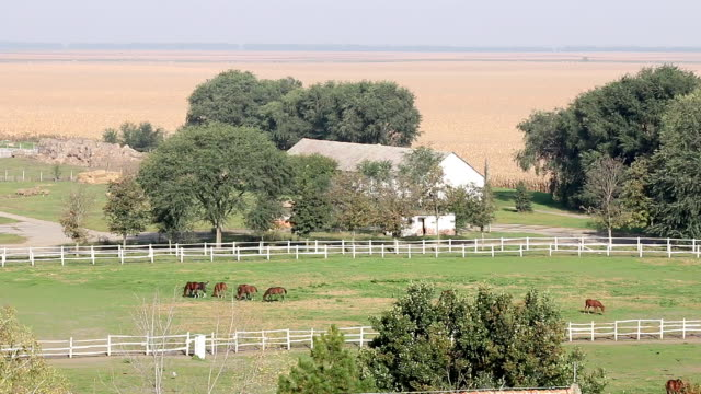 herd of horses in corral farmland landscape herd of horses in corral farmland landscape corral stock videos & royalty-free footage