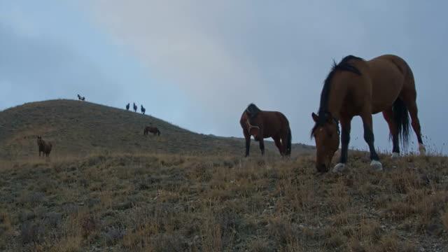 herd of horses on a pasture on a cloudy autumn day - grzywa filmów i materiałów b-roll