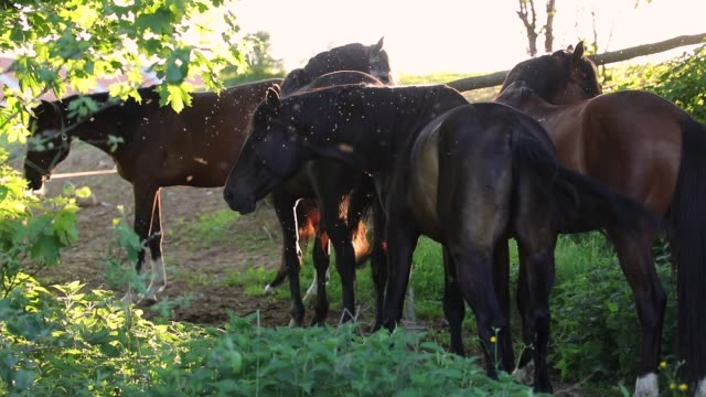 herd of horses on the green meadow - cavallo purosangue video stock e b–roll